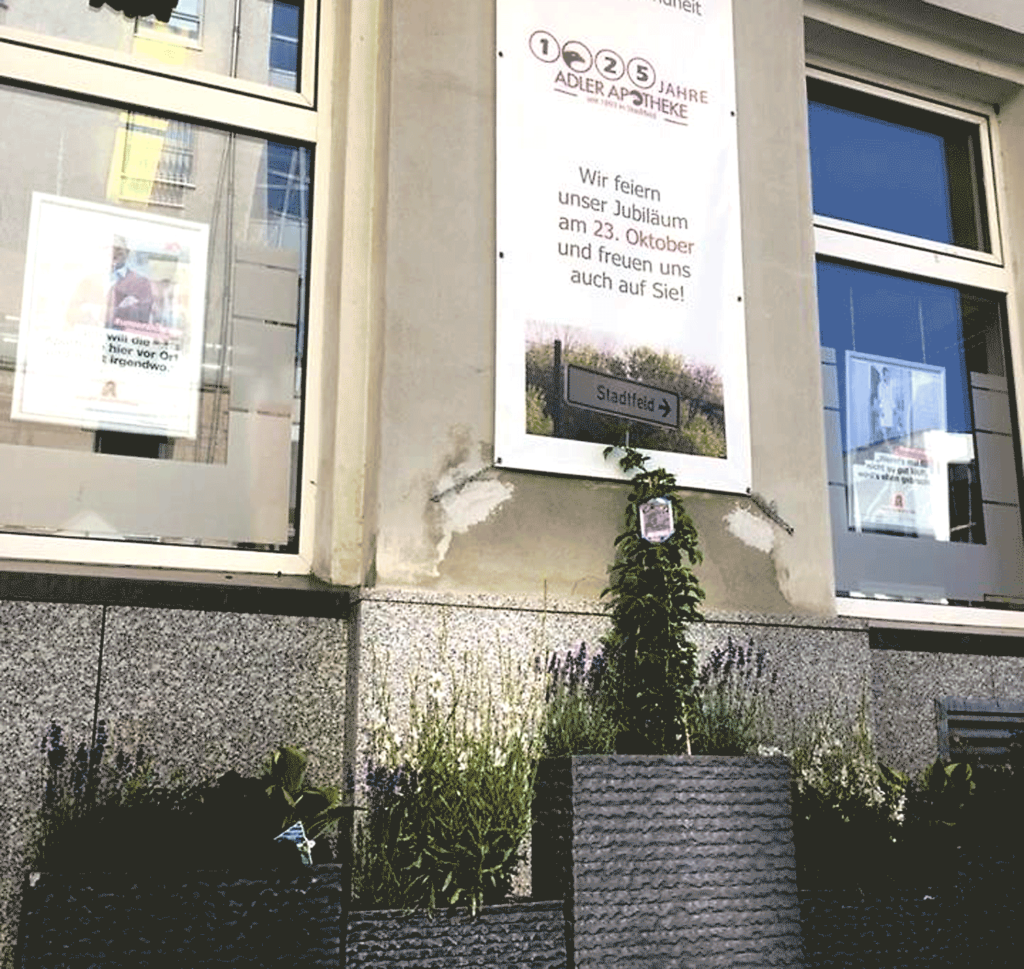 Grünbeflanzung in Magdeburg-Stadtfeld
