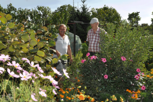 Zwei Männer zwischen blühenden Pflanzen in einem Magdeburger Kleingarten